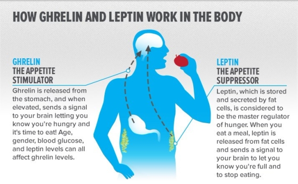 how-ghrelin-and-leptin-work-in-the-body_infographic-v2-3
